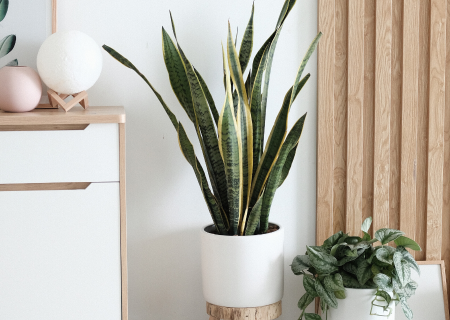 Plants in the home are attractive and healthy