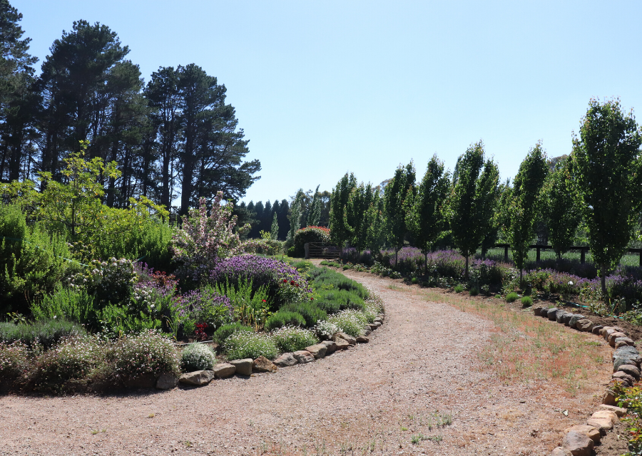 Southern Highlands garden