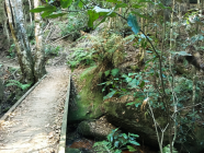 EXPLORE // Cave Creek Walking Track