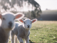 Choosing The Right Pet For Your Southern Highlands Family