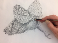Drawing Class For Beginners & Continuing Drawers