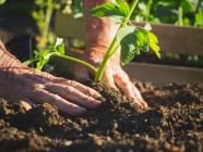 5 Ways Highlanders Can Get Biodynamic In The Garden
