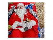 Christmas Photo Booth at Bundanoon Vet