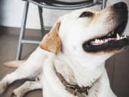 LOCALS IN THE KNOW // Pet Dental Health Tips & Tricks