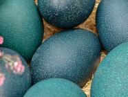 Kazcare School Holiday Workshops - Emu Egg'stravaganza
