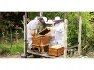 Flow Hive Beekeeping