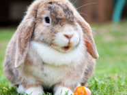 What You Need To Know About Owning Rabbits