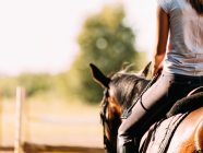 Everything You Need To Know About Owning And Riding Horses In The Southern Highlands