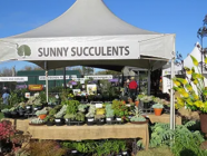 Rare and Collectables Plant Stall