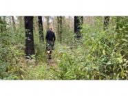Wingello Forest Trails - Working Bee