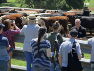 Maugers Paddock to Plate Tour