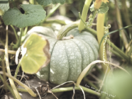 In The Garden :: Prepping For Winter