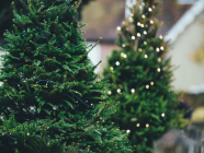 6 Places To Buy Your Fresh Christmas Tree In The Highlands