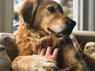 CANINE HEALTH // How To Minimise, Spot And Treat Cruciate Ligament Damage In Dogs